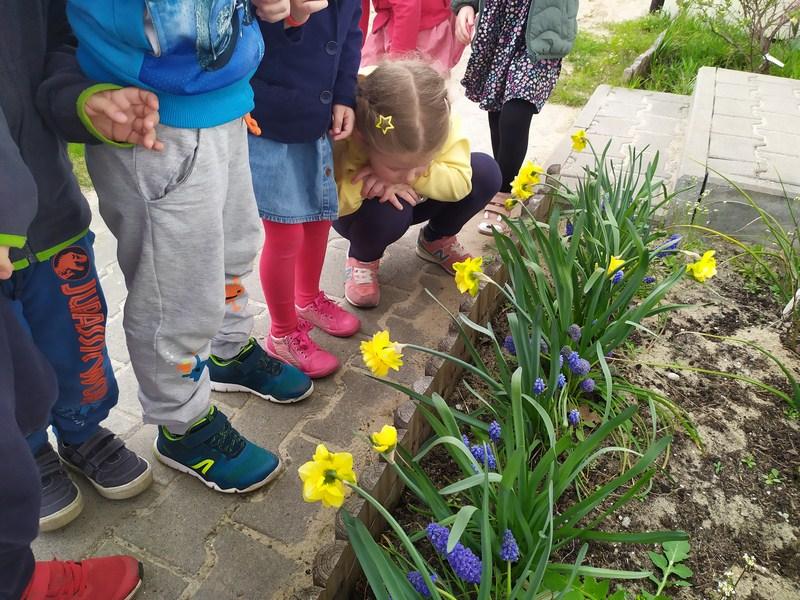 Zdobywcy obserwują wiosenne kwiaty