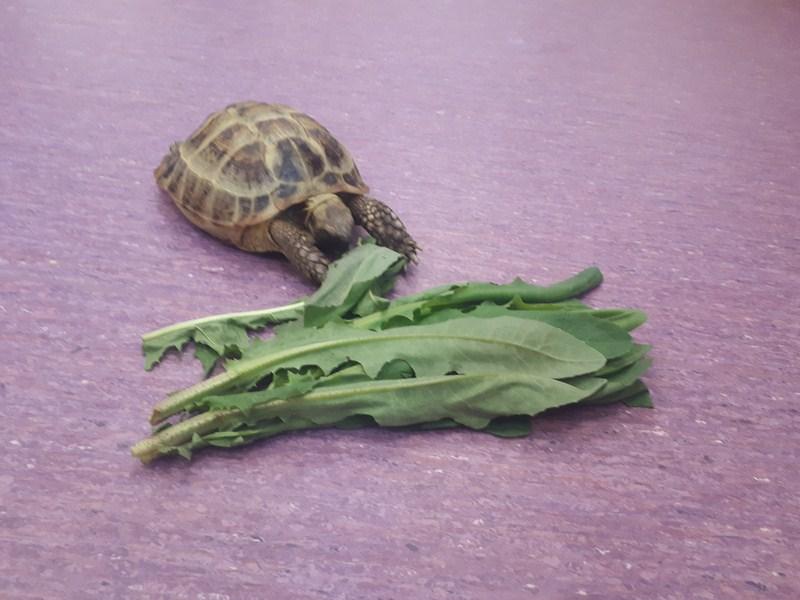 Żółw w Plastusiach